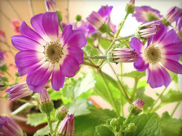厳寒の玄関の花