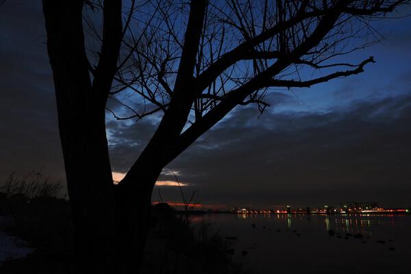 夜明けの樹