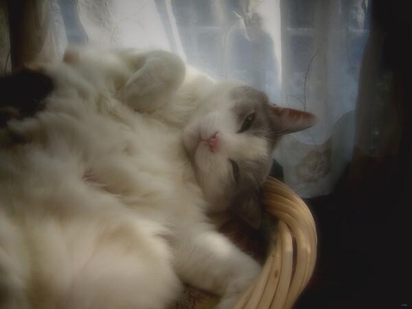【猫】ふかふか