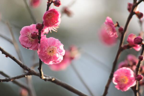【光】早春の輝き