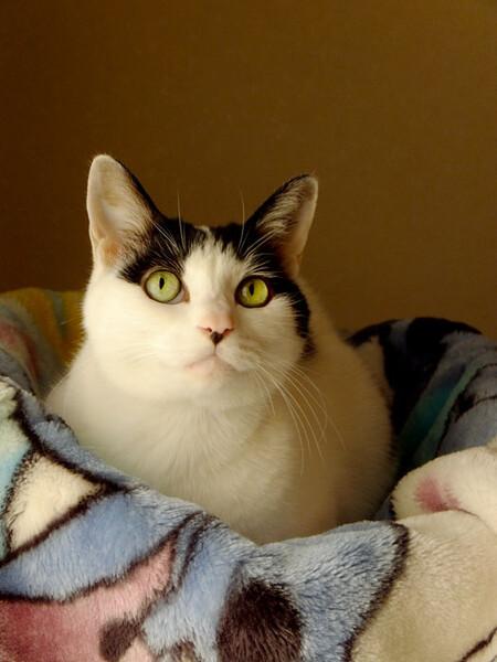 毛布大好き