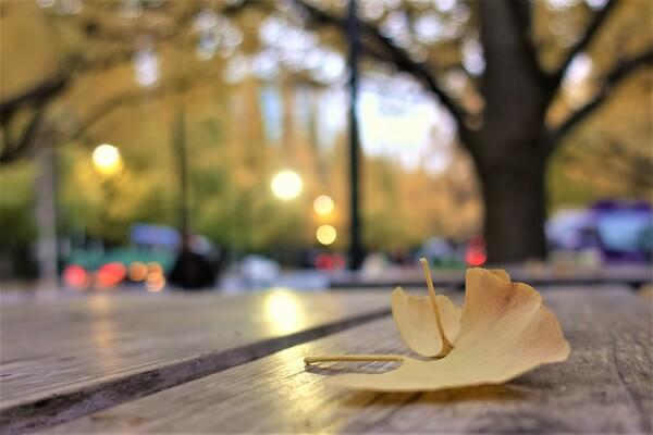 晩秋の落し物