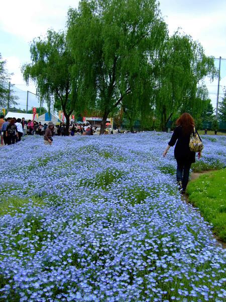 青の庭・・・