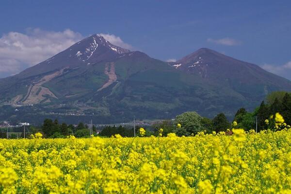 菜の花に磐梯山