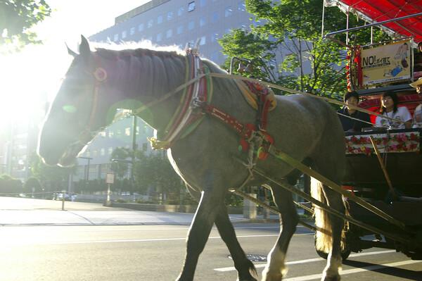 【緑】観光幌馬車