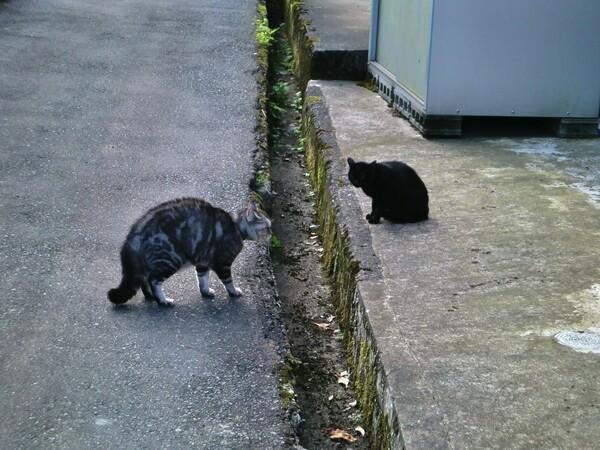 【猫】にらめっこ