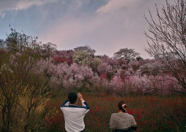 2011年 花見山