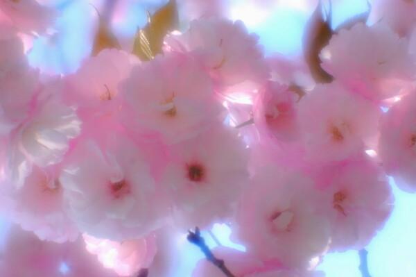 【この色 好き!】春の色#6