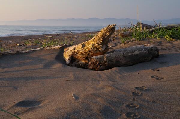 日の傾いた浜辺