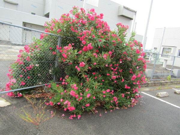 赤い花が大群で咲き乱れ