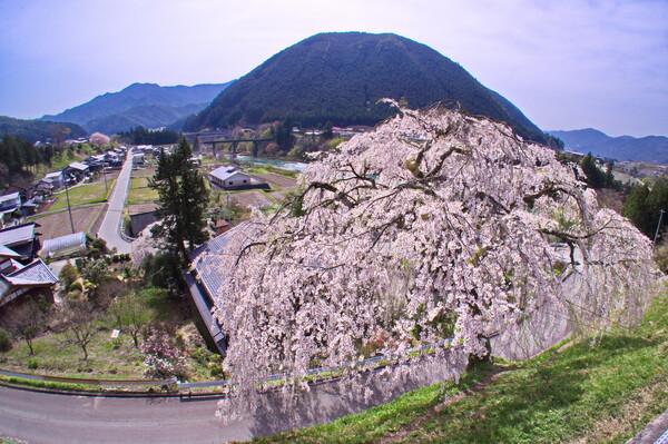 岩太朗桜風景