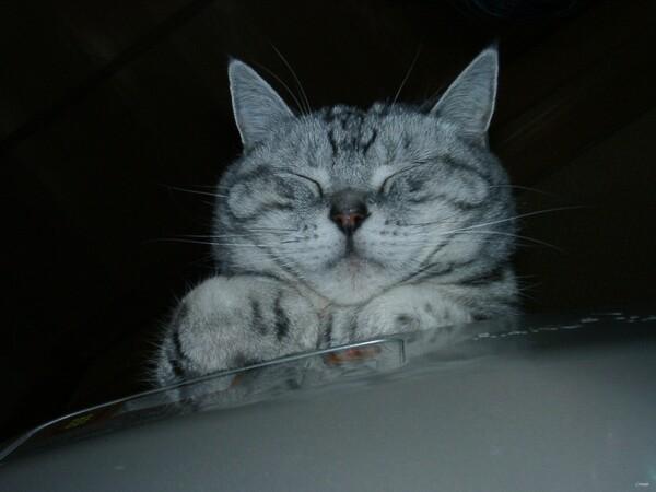 【猫】変な顔
