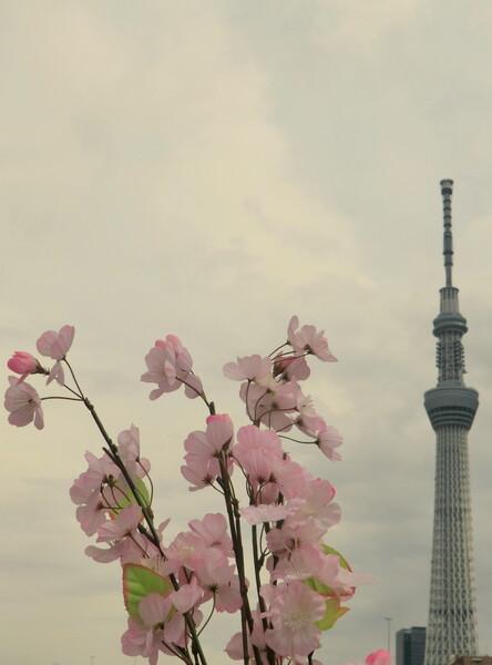 隅田川の風景