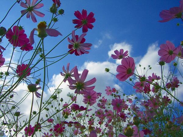 【花のある情景】雲