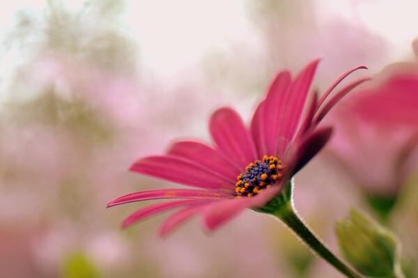 艶やかな花