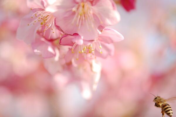 【自然】春