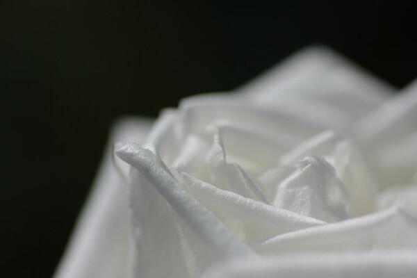白い光のムース