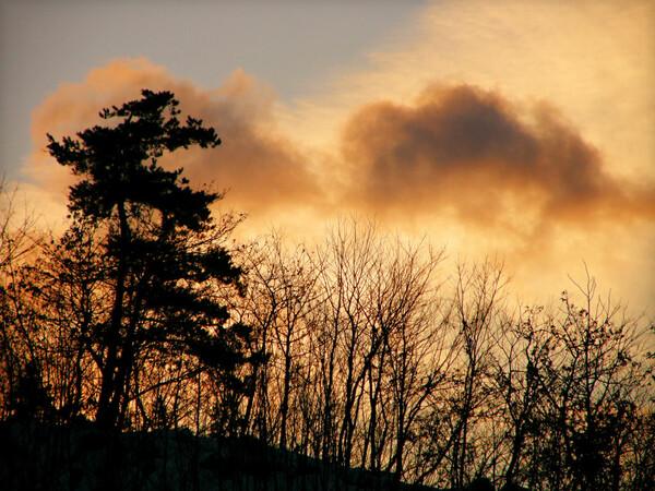 冬木立に雲光る