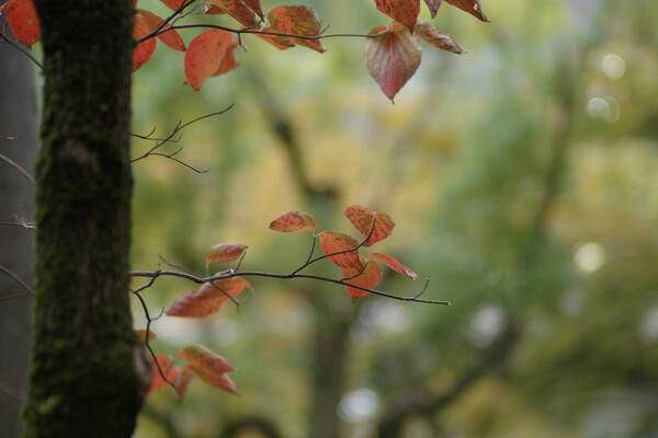 【50】<?!>秋の気配