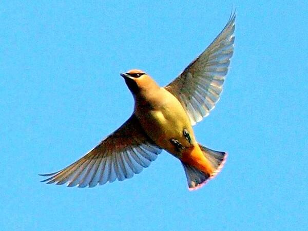 【天】青空を飛ぶ鳥 2