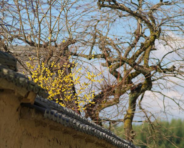 飛鳥八釣に春の兆し(1)
