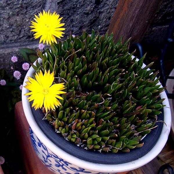 小さい黄色な花