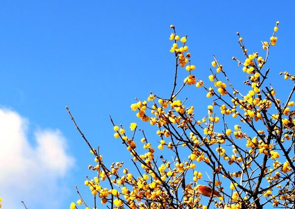 【温】花見れば