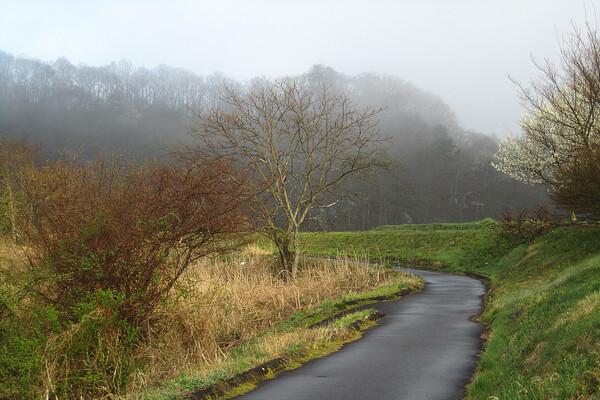朝靄の散歩道