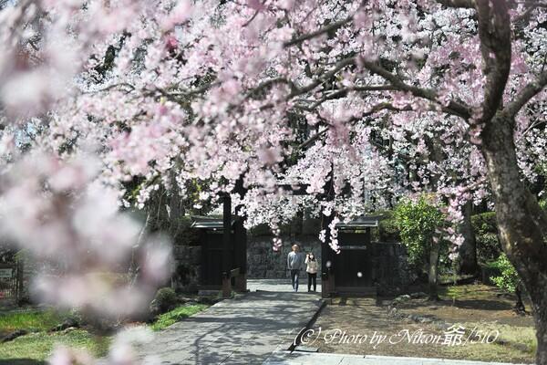 満開の春彩
