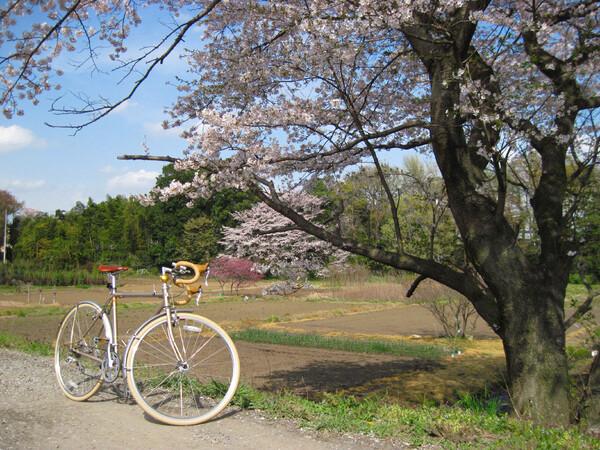 【桜】暖かさに誘われて