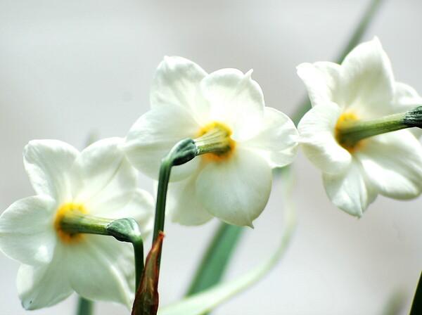 【この色 好き!】春の花#19