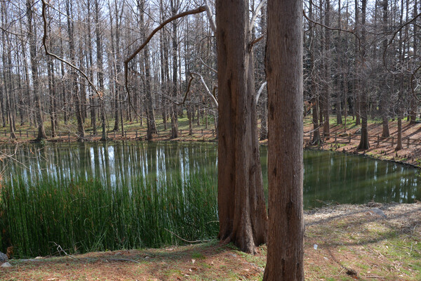 池畔の情景