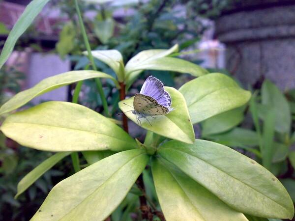 蝶ためし撮り