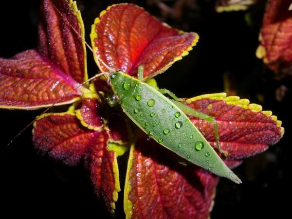 緑色の綺麗な虫!