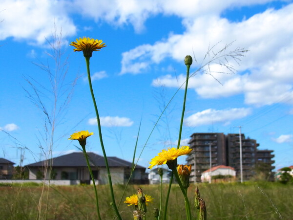 野の花と晩秋の空 - 明るさ修正