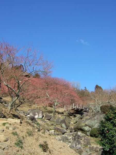 筑波梅林公園・・・