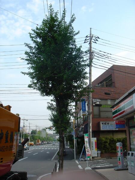 非赤外木々の緑