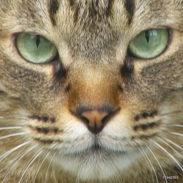 猫に肖像権はいらないのだぁ