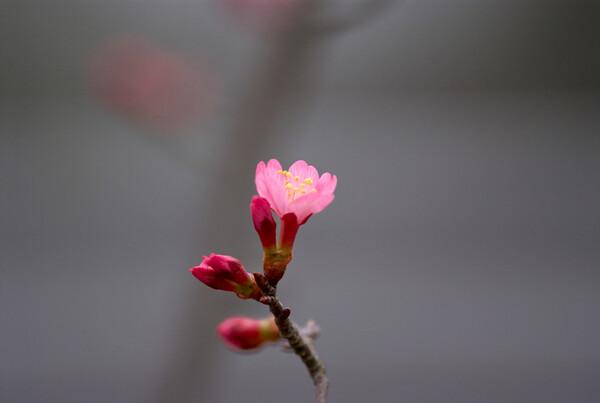 「自然」春の足音