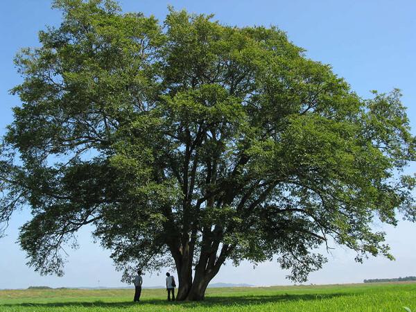 ♪この木、何の木