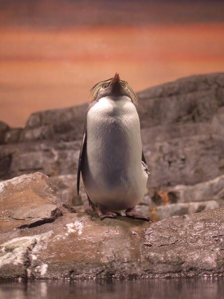 【凛】 視線の先(ペンギン篇)