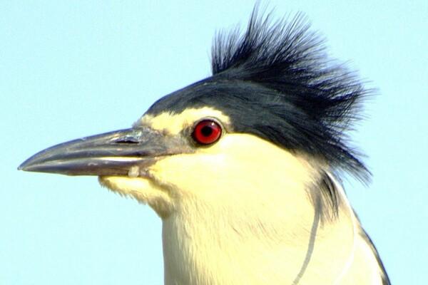 鳥の【横顔】UP 1
