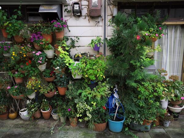 【街角スナップ】私設植物園