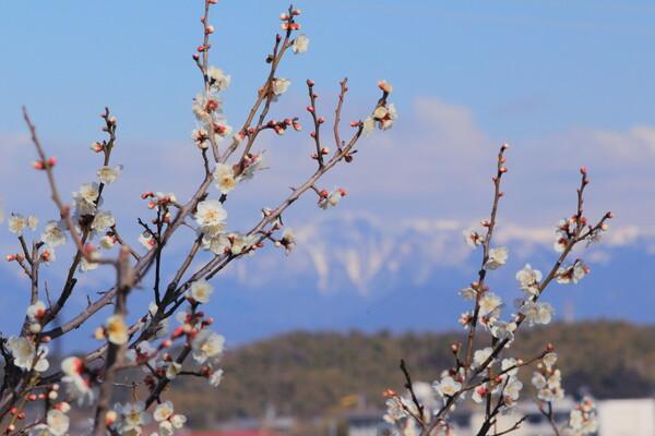 残雪の山を望み