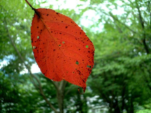 秋のようで秋でない