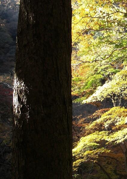 【秋】 松の秋