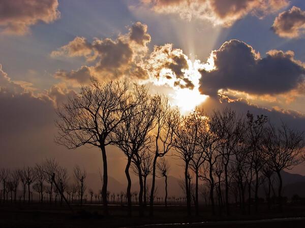 はさ木のある風景
