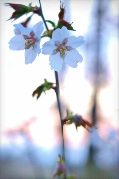 春、ひっそりと