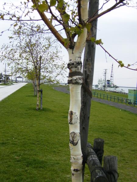 【緑】この木が、お気に入りぃ〜