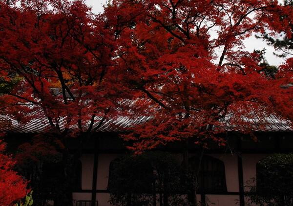 醍醐寺の紅葉5